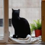 Kocia Kawiarnia,...