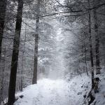 Niemcowa w zimowej...