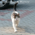 Nawiedzony kociak ;)