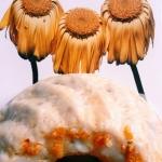 Wegańska babka cytrynowa