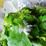 Salatka z mlodych listkow...