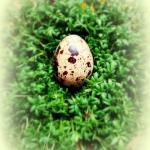 Wielkanocne pierepałki...
