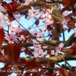 Projekt Sakura – zabawa...