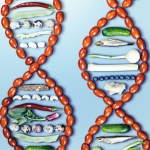 DNA prawdę powie –...
