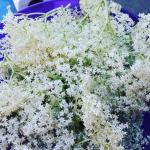 Syrop z kwiatów bzu...