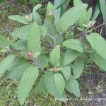 Majowy ogródek ziołowy