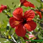 Herbatka z kwiatów...