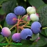 Nalewka z owoców...