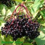 Nalewka z owocow czarnego...