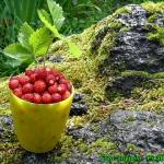 Konfitura z owocow lesnyc...