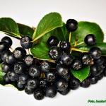 Zdrowy dzem z owocow aron...