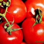 Sok pomidorowy z natką...