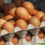 Jajka nadziewane szynką.