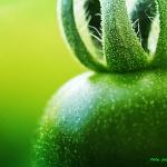 Konserwowe zielone...