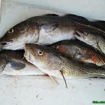 Gotowana ryba morska z po...