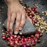 Ekologiczna kawa – o...