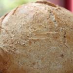 Chlebek rosnący w...