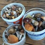 Mrożone grzyby do zupy...