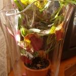 Kwiaty domowe -...