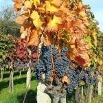 Notatki z Wegier: jesienn...