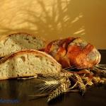 Chleb dlugorosnacy pszenn...