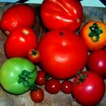 Mix pomidorowy