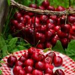 Polskie owoce sezonowe...