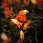 Kolorowe oblicze jesieni