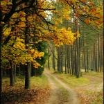 Ulubione jesienią
