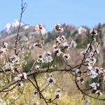 Projekt Sakura